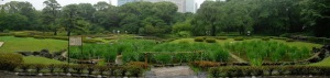 Panoramic view of the ponds